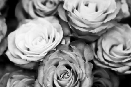 black and white rose 2
