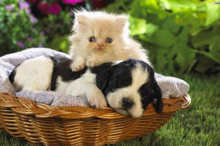 Cat And Dog Wallpapers Top Free Cat And Dog Backgrounds